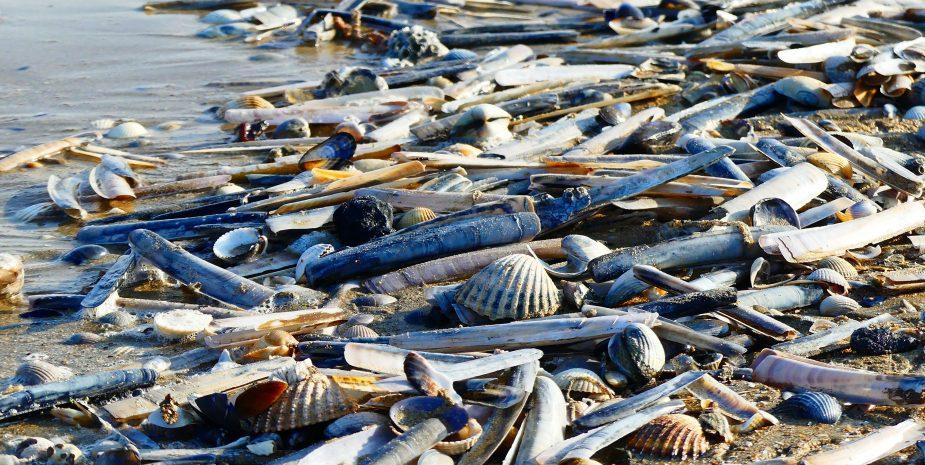 La laisse de mer